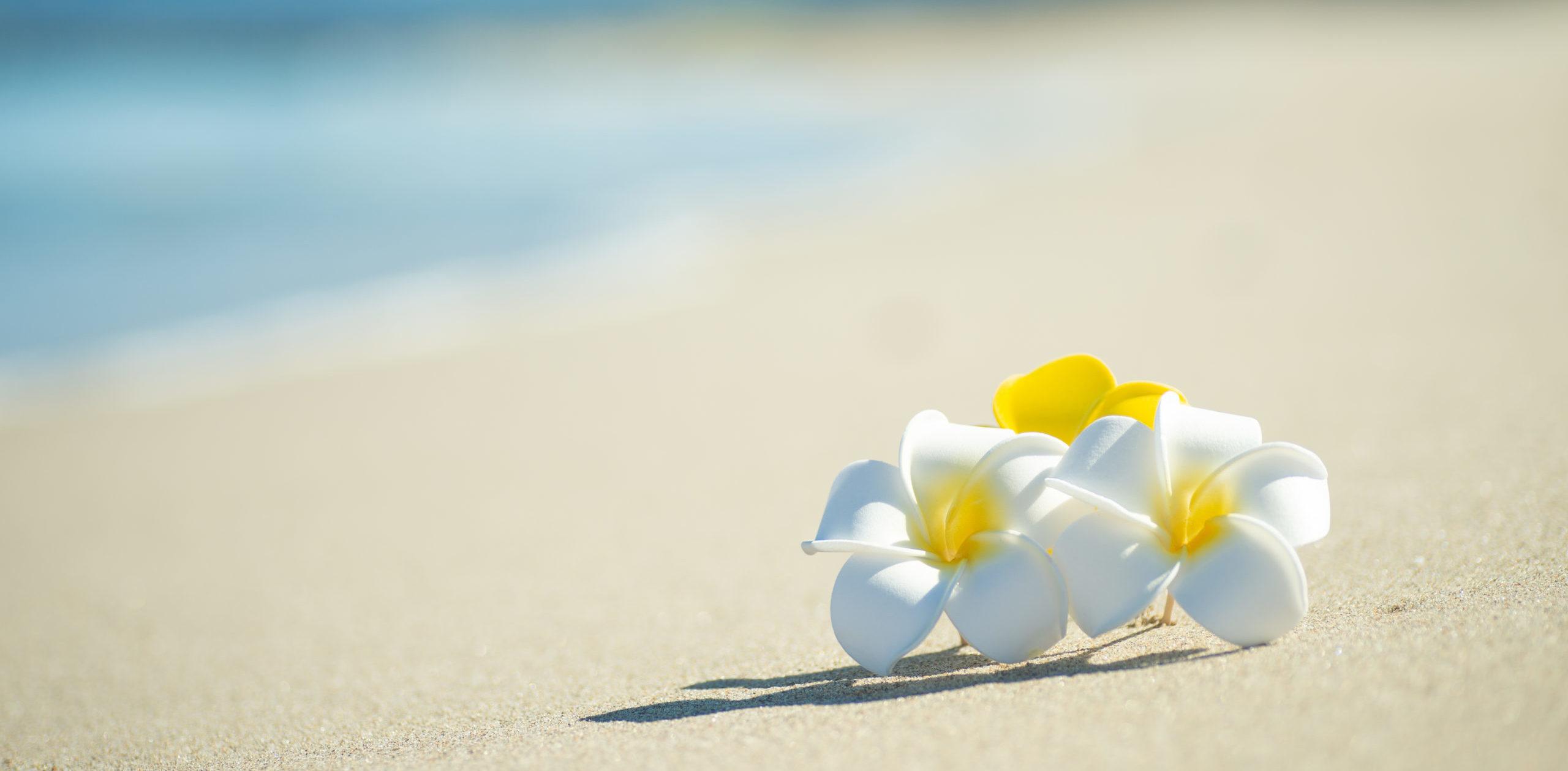 ドナー休暇制度の導入について